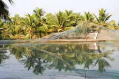 Shrimp farm on the backwaters of Kollam Stock Image