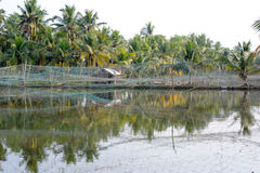 Shrimp farm on the backwaters of Kollam Stock Photo