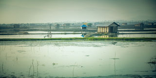Shrimp farm with ponds Royalty Free Stock Images