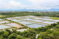 The Shrimp farming Royalty Free Stock Photography