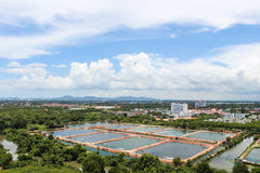 The Shrimp farming. In thailand Stock Photos