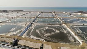 Shrimp farming in indonesia. Shrimp farm, prawn farming with with aerator pump oxygenation water near ocean. aerial view fish farm with ponds growing fish and stock footage
