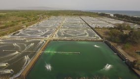 Shrimp farming in indonesia. Shrimp, prawn farming with with aerator pump for oxygenation water. Shrimp farms aerial view aquaculture business exported stock footage