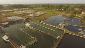 Shrimp farming in indonesia. Shrimp, prawn farming with with aerator pump for oxygenation water. Shrimp farms aerial view aquaculture business exported stock video