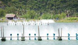 Shrimp Farms Royalty Free Stock Images