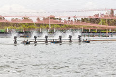 Shrimp Farms covered with nets Stock Photo