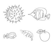 Shrimp, fish, hedgehog and other species.Sea animals set collection icons in outline style vector symbol stock. Illustration royalty free illustration