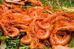 Shrimp at fish market stock images