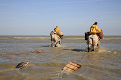 Shrimp Fishermen on horseback, Oostduinkerke, Belgium Royalty Free Stock Photo