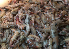 Shrimp and flies. Royalty Free Stock Photo