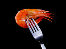 Shrimp on Fork. Isolated image of cooked and fried shrimp seafood on fork royalty free stock photos