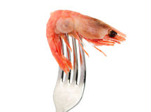 Shrimp on a fork isolated Stock Images