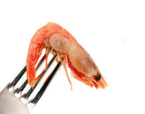 Shrimp on a fork isolated Stock Image