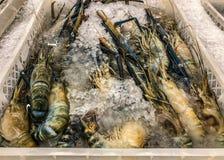 Shrimp freeze in Thailand. Shrimp freeze in maket Thailand Royalty Free Stock Image