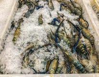 Shrimp freeze in Thailand. Shrimp freeze in maket Thailand Stock Image