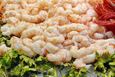 Shrimp. Fresh delicious seafood gourmet Stock Photography