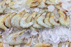 Shrimp frozen in ice. For sale Stock Image
