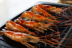 The Shrimp grill Royalty Free Stock Photo