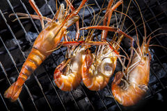 Shrimp grilled on barbeque charcoast oven Royalty Free Stock Photo