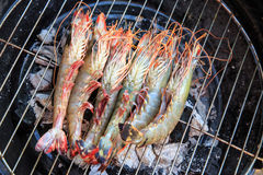 Shrimp grilling Royalty Free Stock Photo