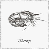 Shrimp. Hand drawn sketch. Collection of seafood. Royalty Free Stock Photography