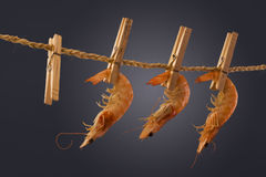 Shrimp Hanging Out. Stock Photography