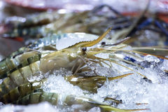 Shrimp is heap with ice in basin at supper market. Royalty Free Stock Photos