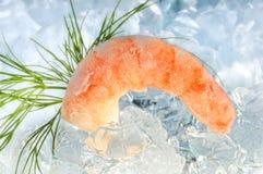 Shrimp on ice Royalty Free Stock Photo