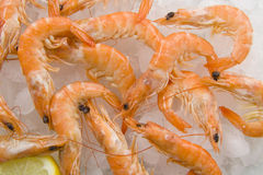 Shrimp on ice Royalty Free Stock Image