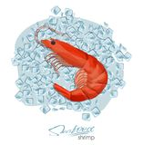 Shrimp on ice cubes in cartoon style. Fresh prawns. Seafood product design. Inhabitant wildlife of underwater world. Vector illustration. Edible sea food Stock Image