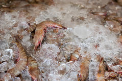 Shrimp in the ice Royalty Free Stock Photography