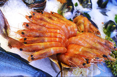Shrimp in ice Royalty Free Stock Image