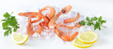 Shrimp on the ice with lemon Royalty Free Stock Image