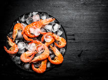 Shrimp with ice on the plate. Stock Photography