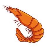 Shrimp isolated illustration Royalty Free Stock Photography