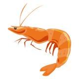 Shrimp isolated illustration Stock Photos