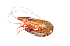 Shrimp in isolated on white Royalty Free Stock Photos