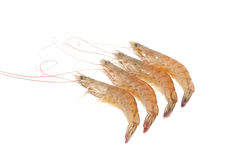 Shrimp isolated on white background Royalty Free Stock Photos