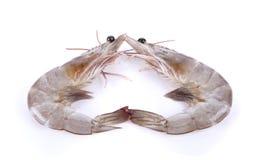 Shrimp isolated on white background Stock Image