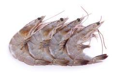 Shrimp isolated on white background Royalty Free Stock Photos