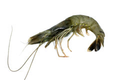 Shrimp isolated Royalty Free Stock Image