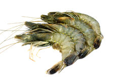 Shrimp isolated Royalty Free Stock Photos