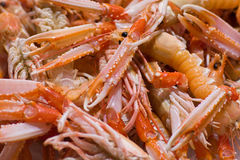 Shrimp, langoustine Royalty Free Stock Images