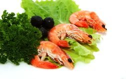 Shrimp with lettuce, parsley Stock Images