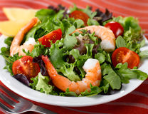 Shrimp Lettuce Salad Stock Images