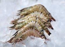 Shrimp lying Stock Image