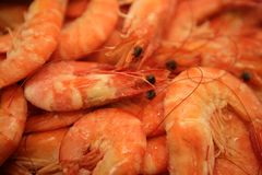 Shrimp macro texture, many orange prawns Stock Photography