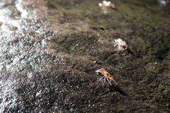 Shrimp march,Unseen Thailand Royalty Free Stock Image