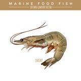 Shrimp. Marine Food Fish. Shrimp illustration. Marine food fish, editable gradient vector Stock Photography
