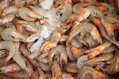 Shrimp on market counter Royalty Free Stock Images